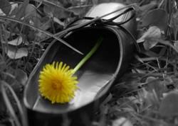 flor-no-sapato